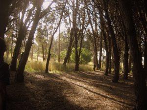 Miramar Buenos Aires Bosques