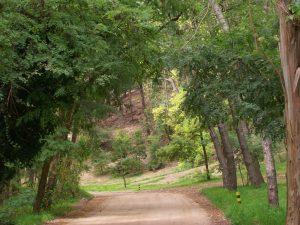 Miramar Buenos Aires Bosques Energeticos