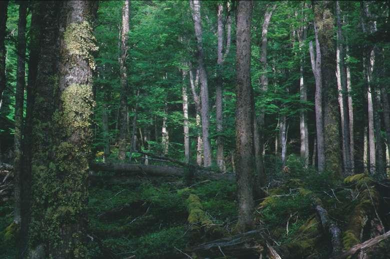 Parque-Nacional-Tierra-del-Fuego-8