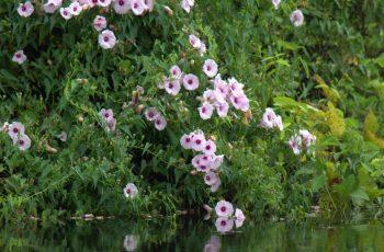 flora y fauna de argentina