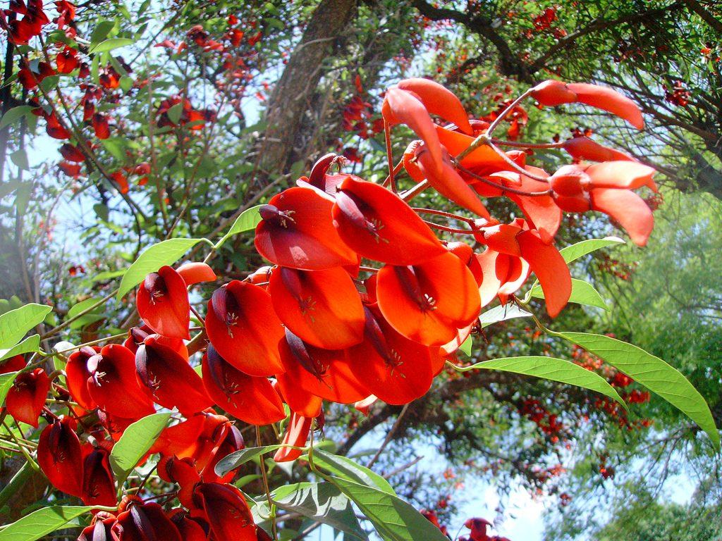flova y fauna de argentina