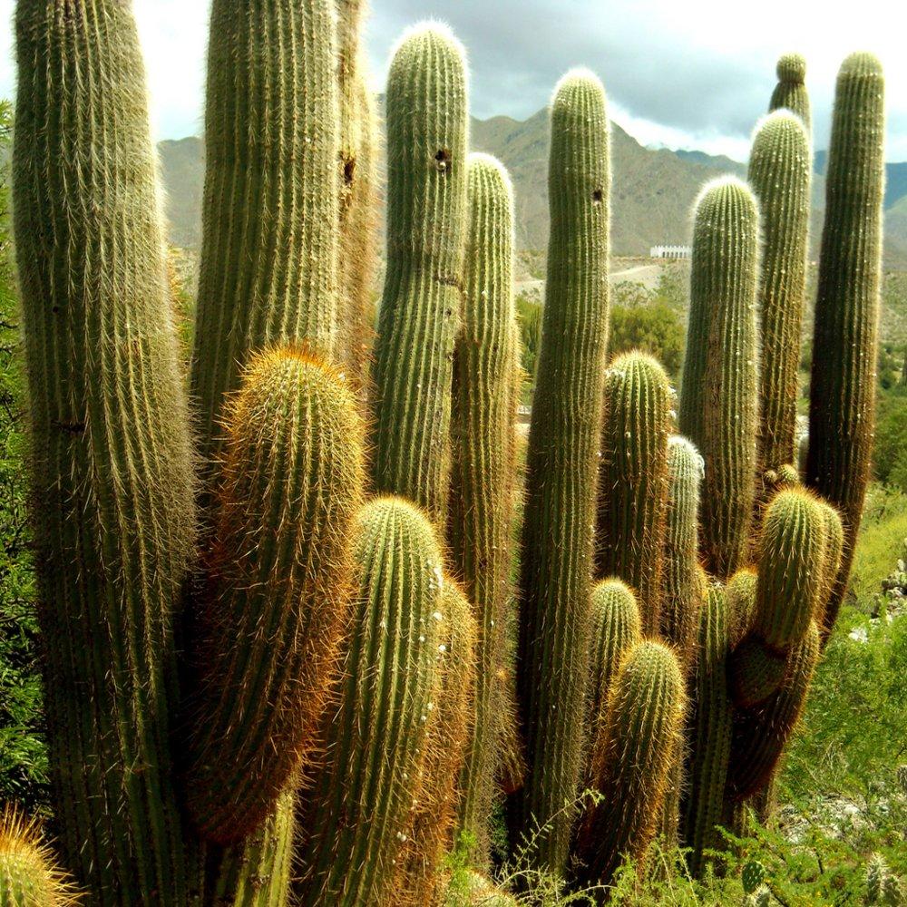 Parque-Nacional-Los-Cardones-1