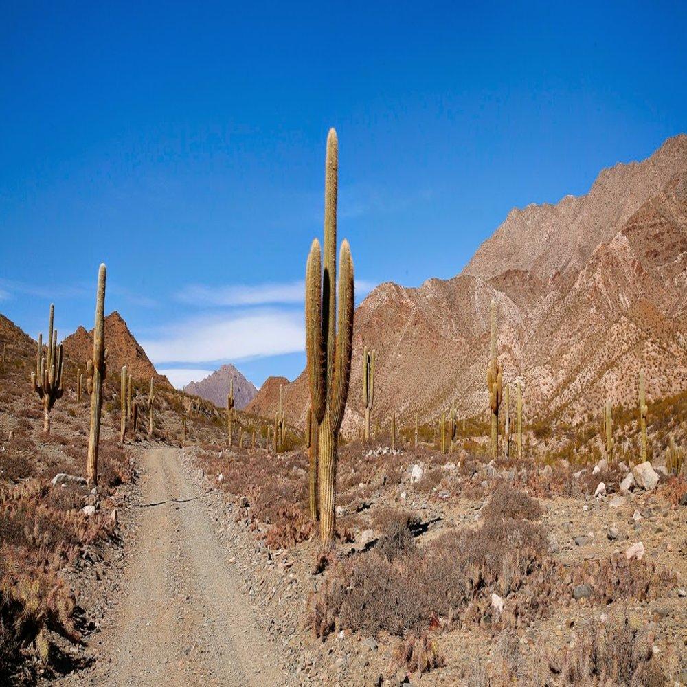 Parque-Nacional-Los-Cardones-10