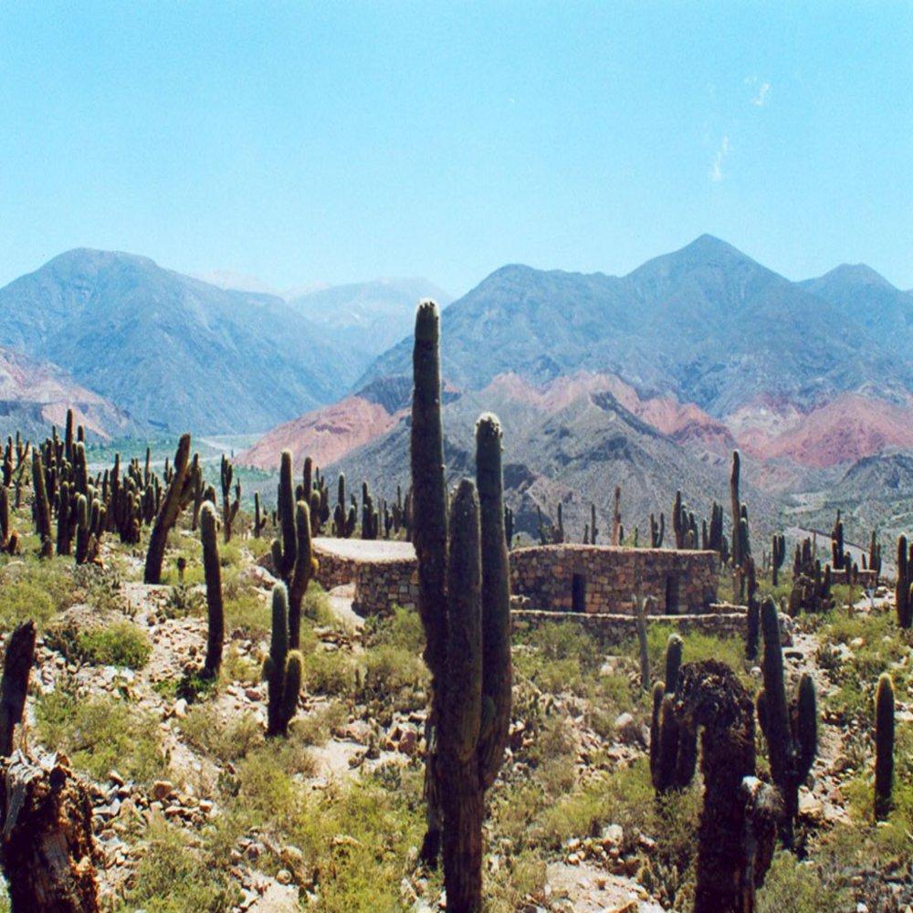 Parque-Nacional-Los-Cardones-5