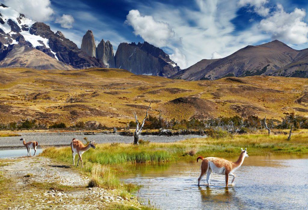 parque nacional patagonia