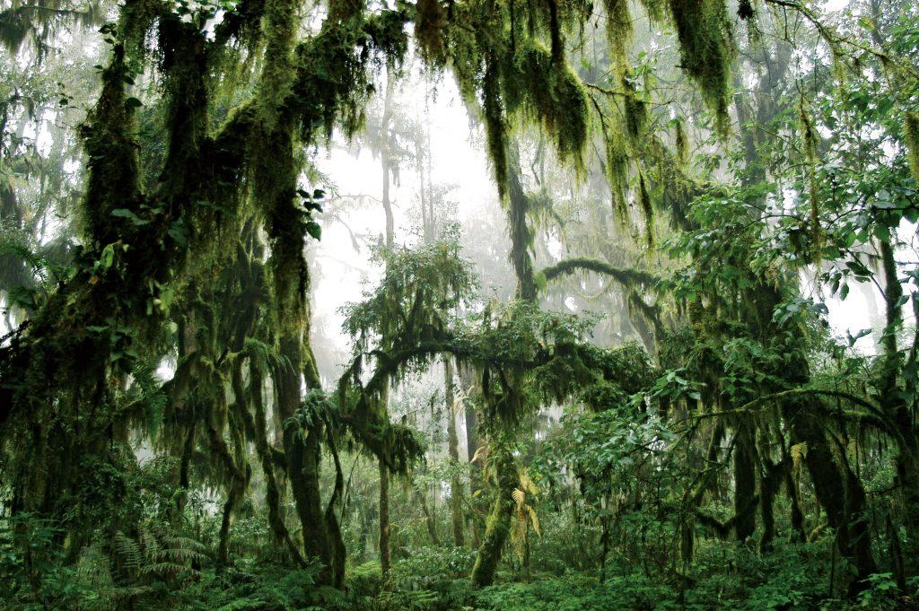 parque nacional calilegu